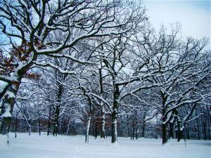 White Oaks  BFP  winter