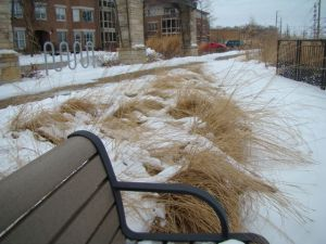prairie dropseed winter bench