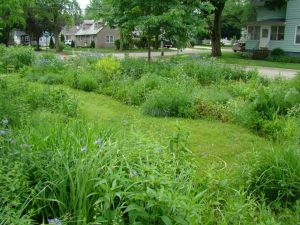 side yard june 2015