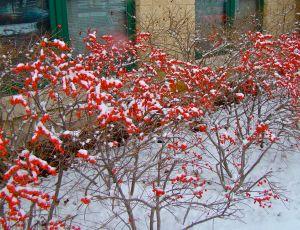 wintersprite