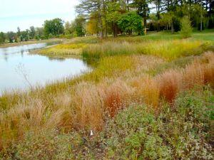 little-bluestem-morton-arboretum-fall