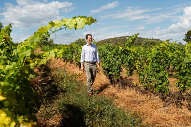 Дни вина и оливок: как старые методы ведения сельского хозяйства окупаются