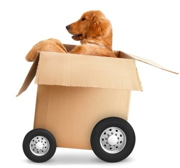 natural pet care delivery