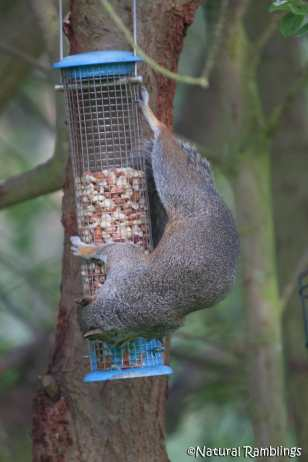 squirrel-feeder3