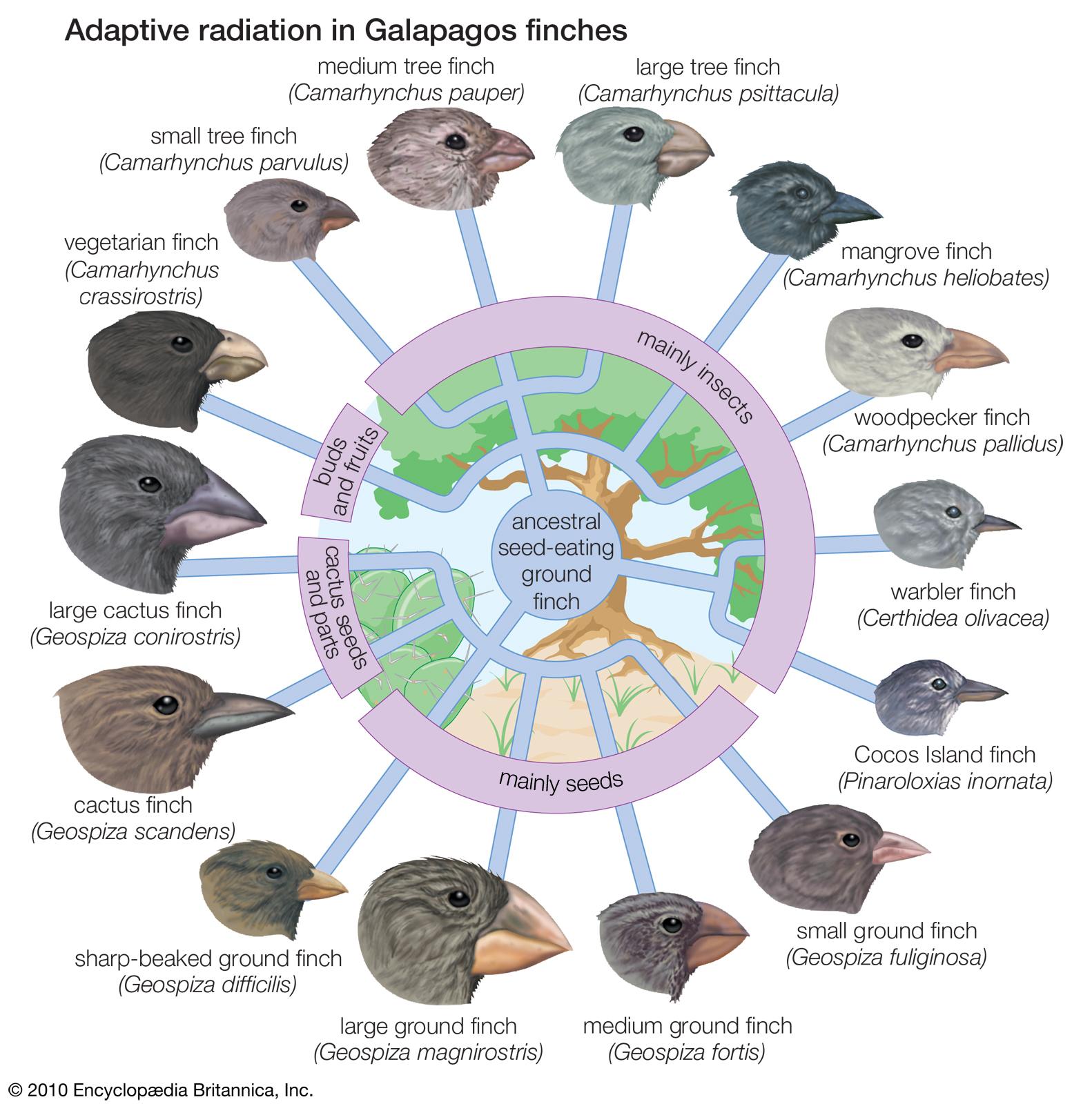 Chapter 3 Evolution By Natural Selection Outline Part I