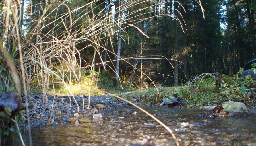 Kräutergarten - Wunder der Natur