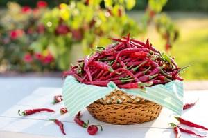 Chili ist nicht nur scharf, er macht auch scharf und somit ein perfektes natürliches Aphrodisiaka