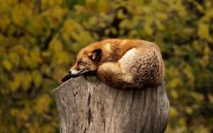 Burnout - üben sie sich in Entspannungsübungen