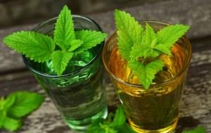 Melisse - der Hauptbestandteil des bekannten Karmeliterinnenwasser