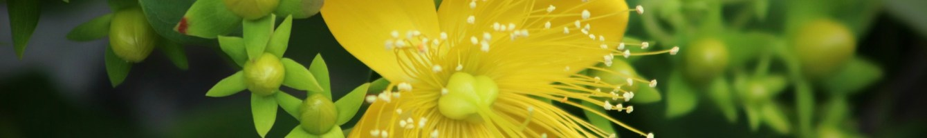 Pflanzliche Beruhigungsmittel