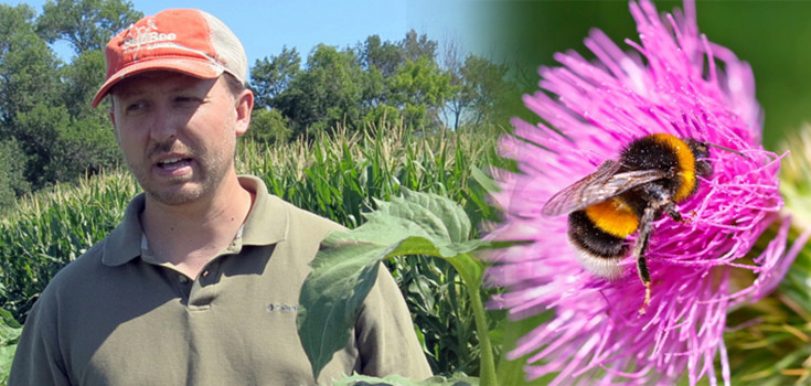 article-jonathan-scientsit-bees-reseach-usda-735-350
