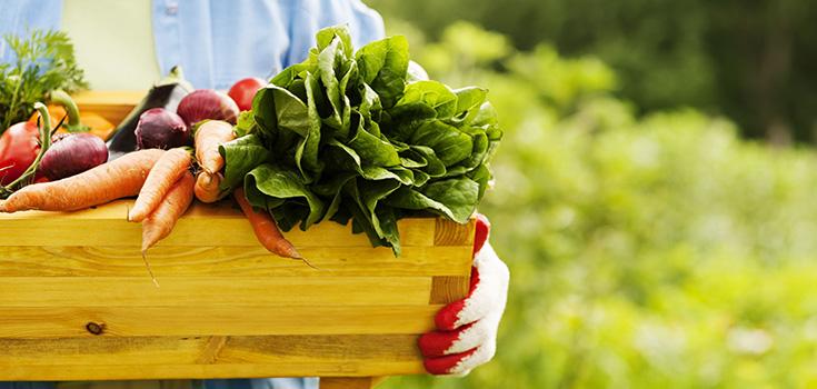 food0-garden-crops-produce-735-350