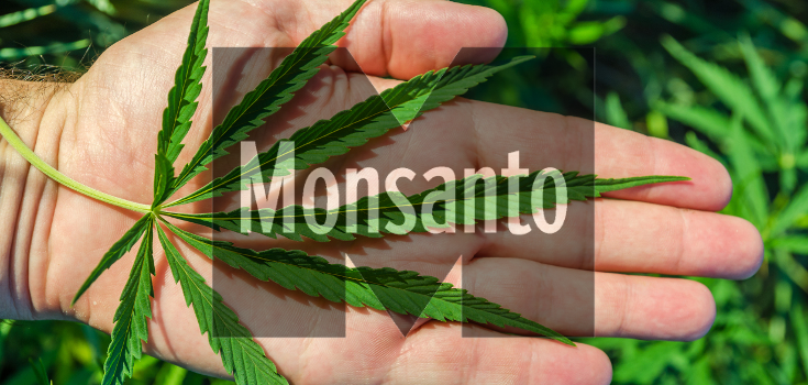 Monsanto GM marijuana