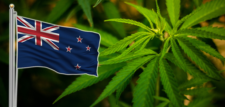 marijuana new zealnd