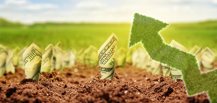 money crop field growth arrow 735x350