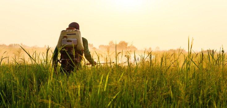 pesticides_sun_735_350