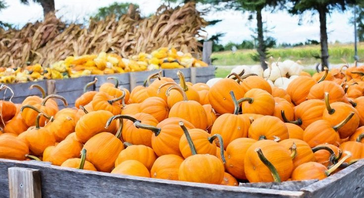 Fall time is pumpkin time