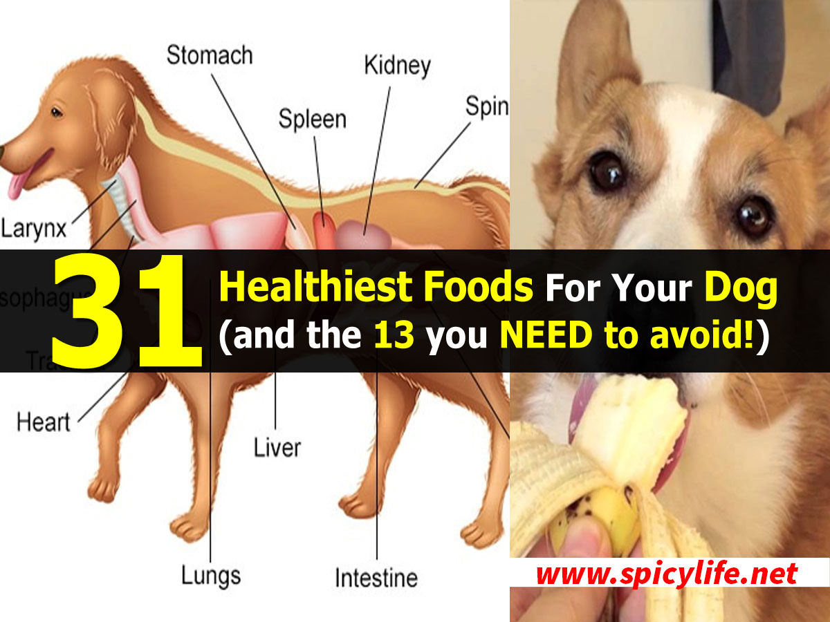 Natural Ways To Boost Your Dog