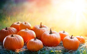There are many benefits to add pumpkin to your diet