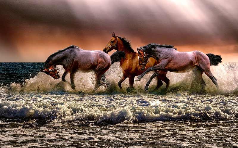 Turbulent Horses- Marriage is good health Blog