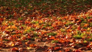 leaf-debris-clean-up