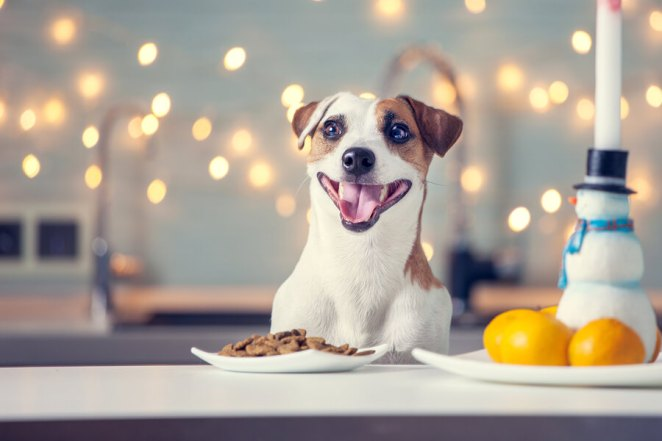 Best Dog Food-eating--at-home-Happy