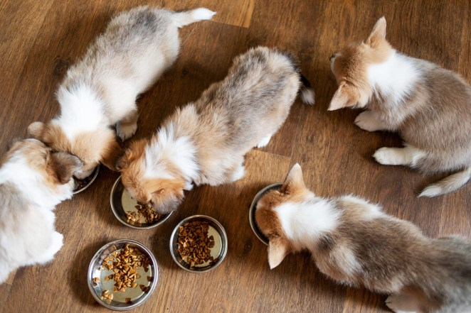 Puppies-Eating-Best Dog Food-