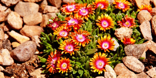 How to Save Money with Xeriscape Ideas_Plants