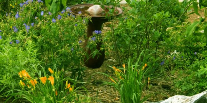 How to Save Money with Xeriscape Ideas_Save Water