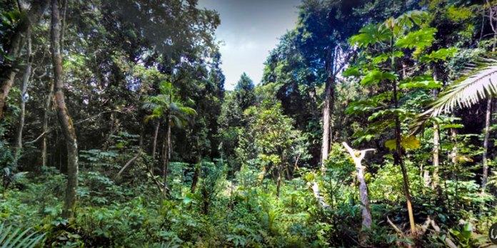 Trilhas em Iguape foto