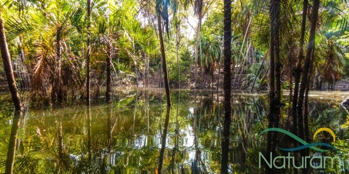 Alter do Chão - Floresta Encantada foto