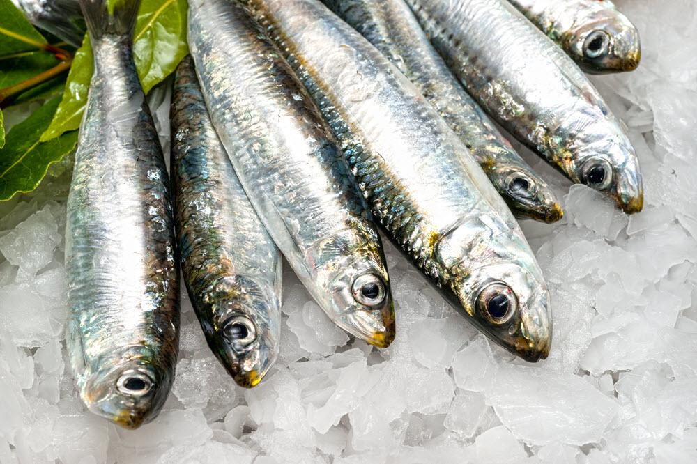 Si possono includere le sardine nella dieta BARF del mio cane?