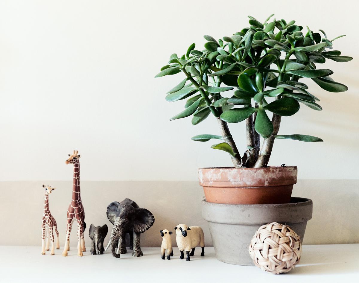 Plante environnement préparé Montessori nature-et-famille