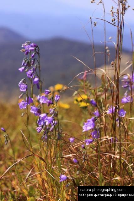 Очаровательные полевые цветочки - скачать обои, картинки ...