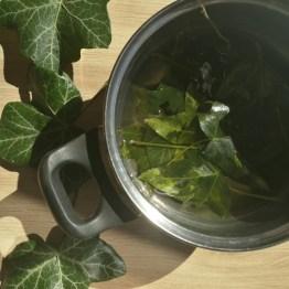 Faire une décoction de feuilles de Lierre