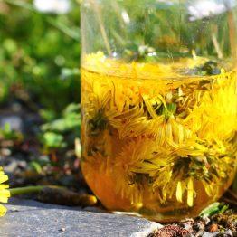 fleurs de pissenlit dans huile