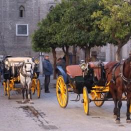 chevaux à Séville