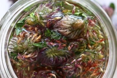 Trifolium pratense oil