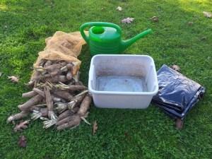 Matériel pour cultiver des endives à la maison