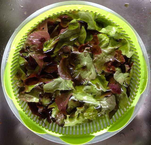 Trempage de la salade dans l'eau salée
