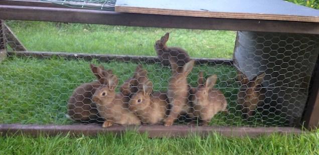 Notre élevage de la lapins