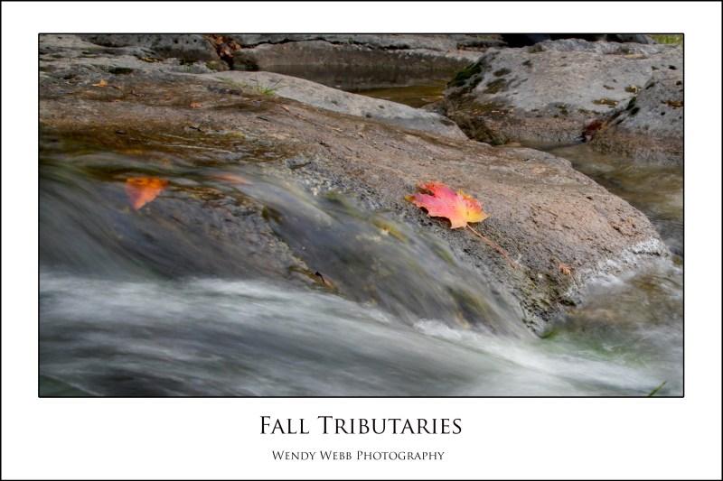 Fall tributaries