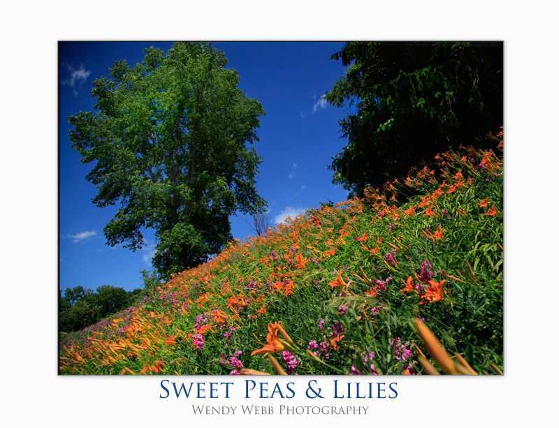 sweet peas and lilies
