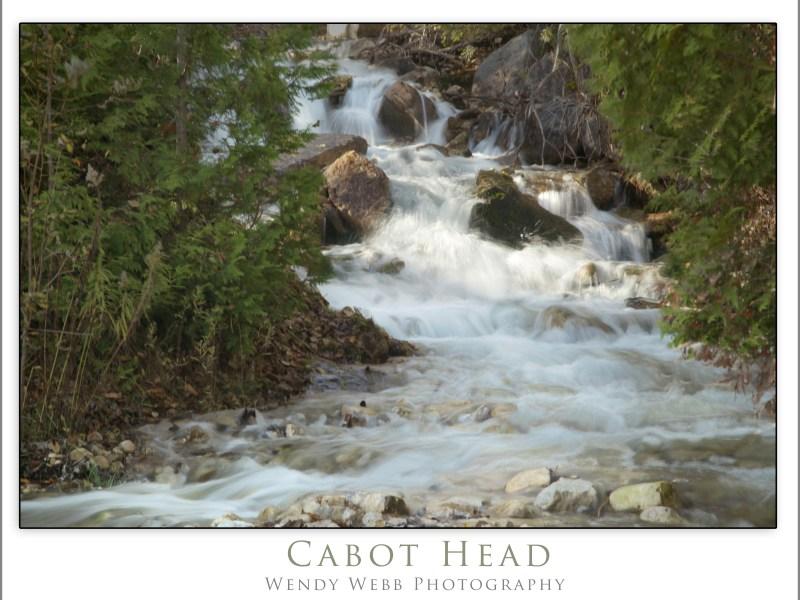 cabot head2