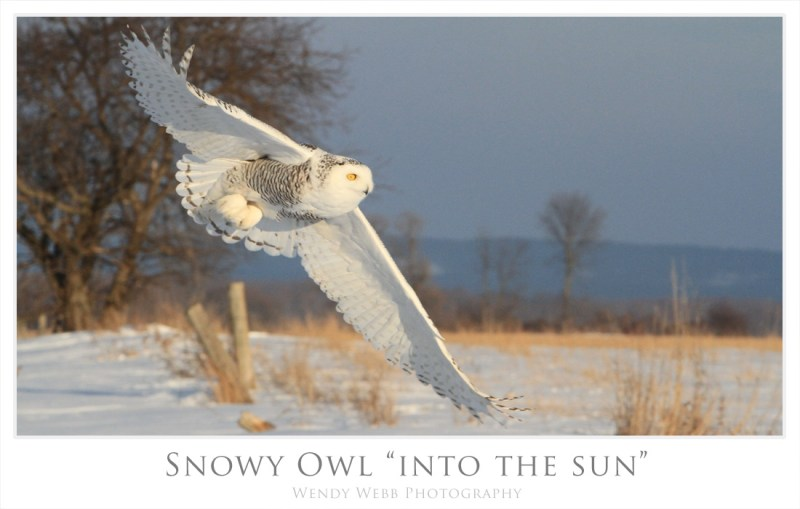 snowy into the sun