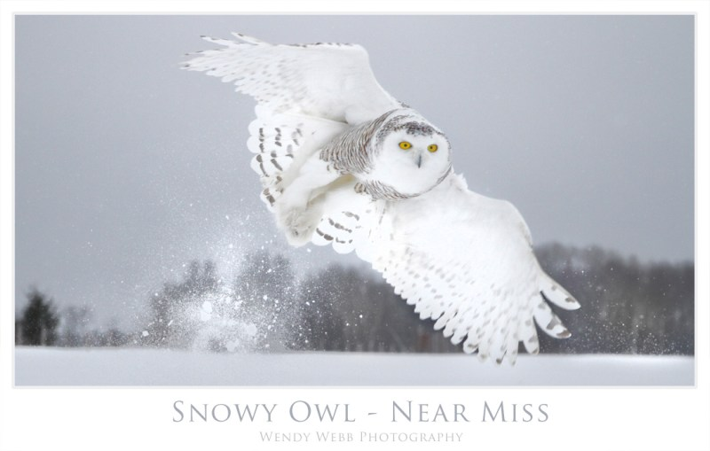 snowy - near miss