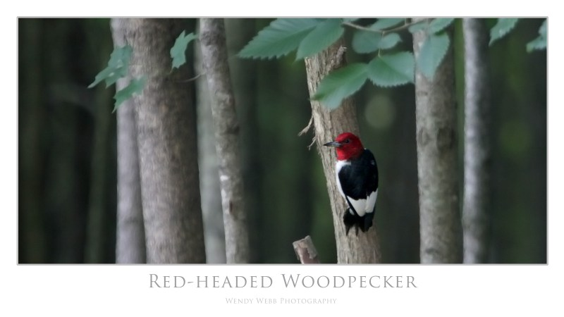 red-headed 1