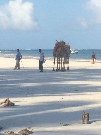 The girls have yet to go on a camel ride...maybe on our last day.