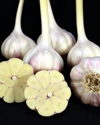 Ail Garlic - Rose de Lautrec - Bulbes Coupe - natureail.ca