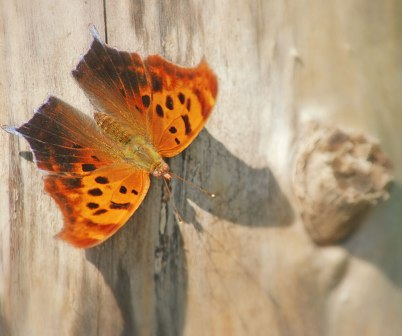Comma on fence